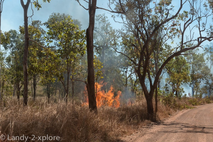 Bushfires-3