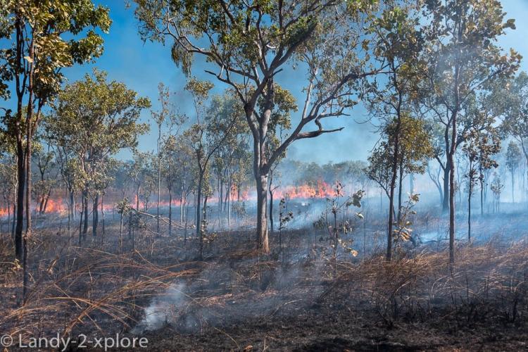 Bushfires-6