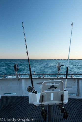Coral-Bay-Fischen-und-Wale-2