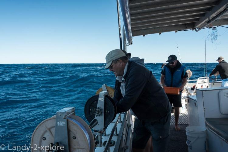 Coral-Bay-Fischen-und-Wale-7