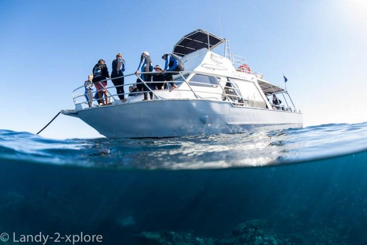 Coral-Bay-Schnorcheln-und-Manta-1