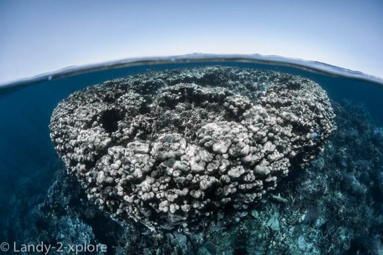 Coral-Bay-Schnorcheln-und-Manta-6