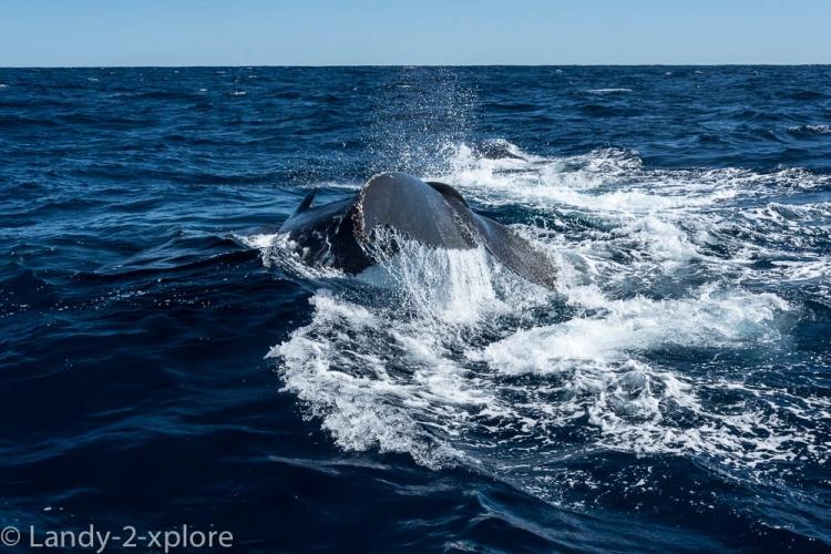 Coral-Bay-Fischen-und-Wale-10