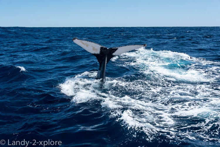 Coral-Bay-Fischen-und-Wale-11