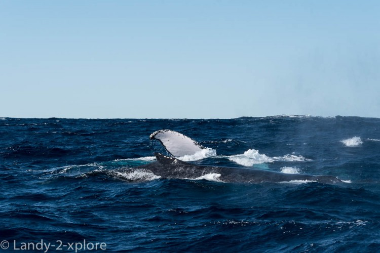 Coral-Bay-Fischen-und-Wale-6