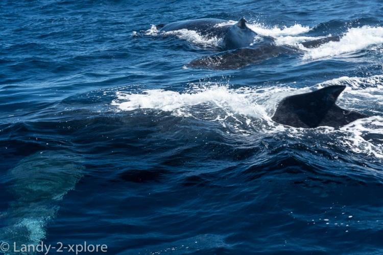 Coral-Bay-Fischen-und-Wale-9