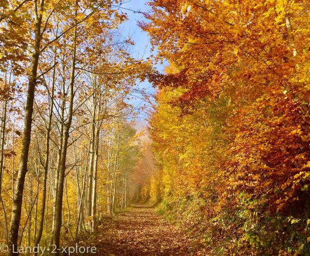 Wanderungen-Herbst-1