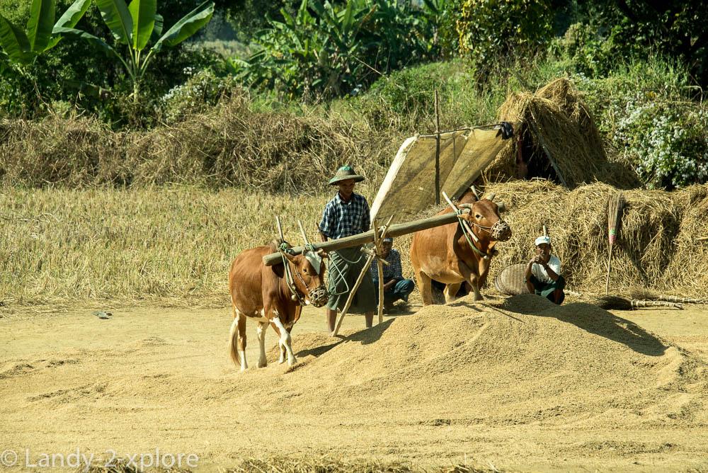 Nordwest-Myanmar-10