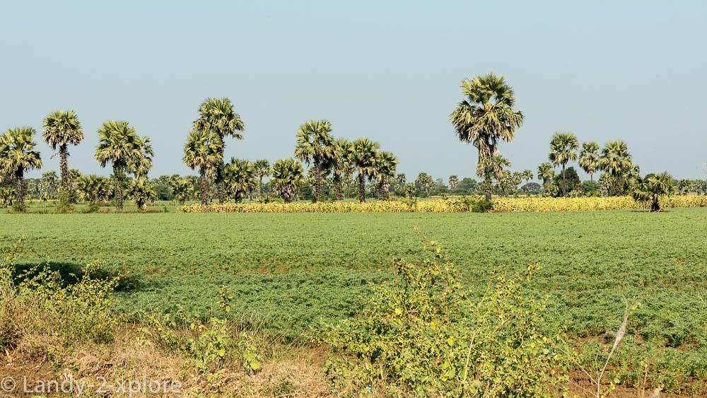 Nordwest-Myanmar-8