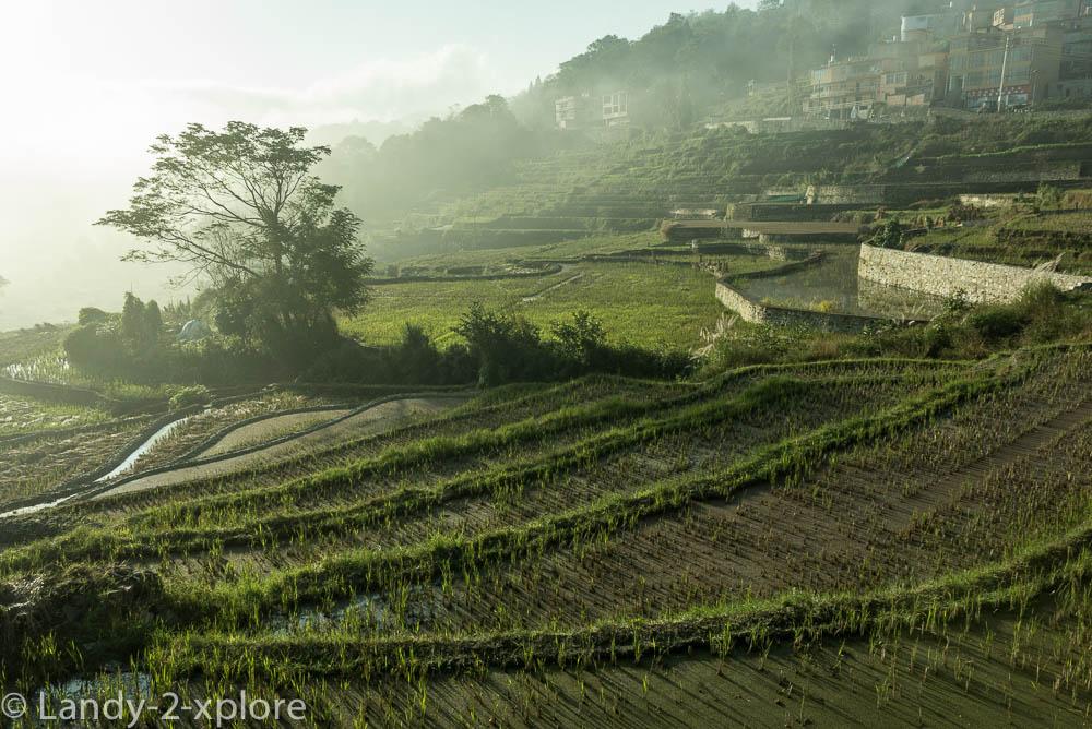 Zu-Reisterrassen-und-Teeplantagen-5