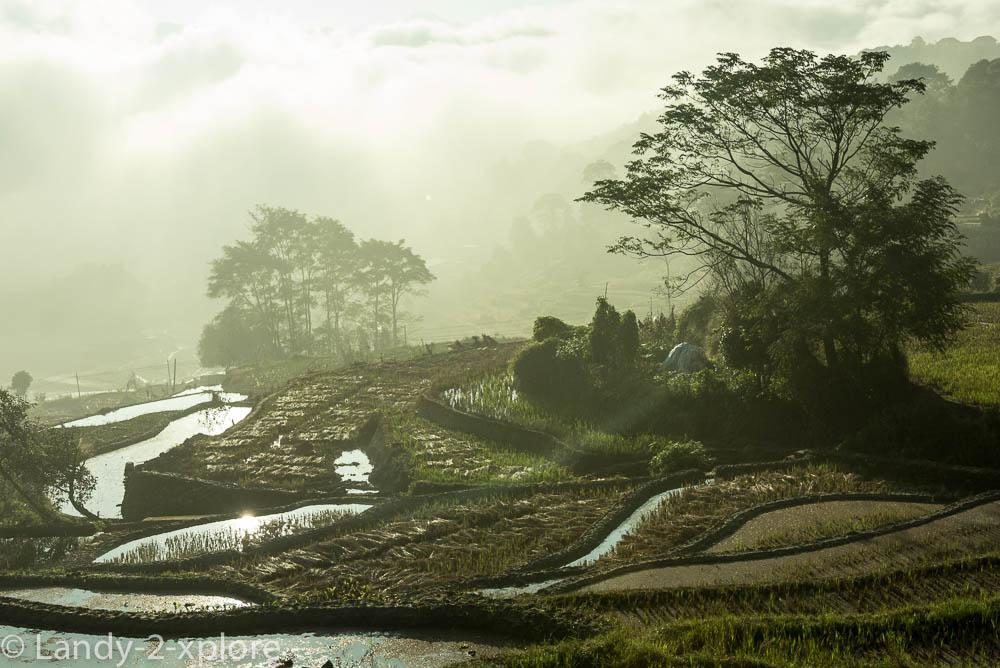 Zu-Reisterrassen-und-Teeplantagen-6